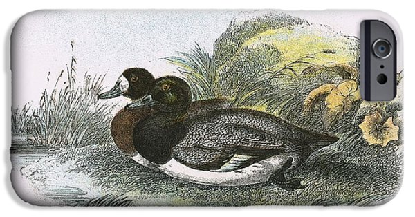 Scaup Duck IPhone 6s Case by English School