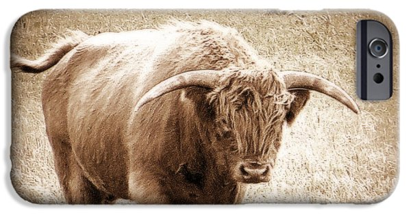 IPhone 6s Case featuring the photograph Scottish Highlander Bull by Karen Shackles