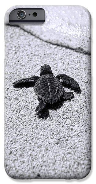 Sea Turtle IPhone 6s Case