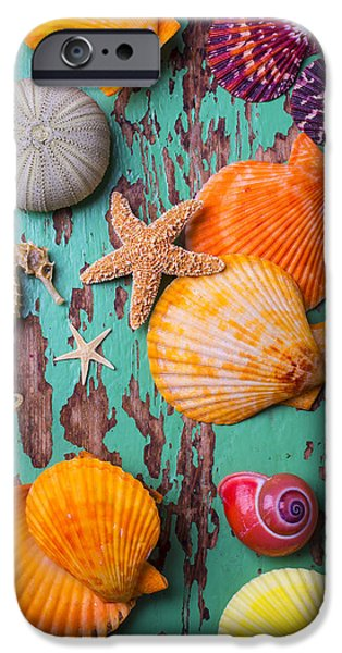 Shells On Old Green Board IPhone 6s Case