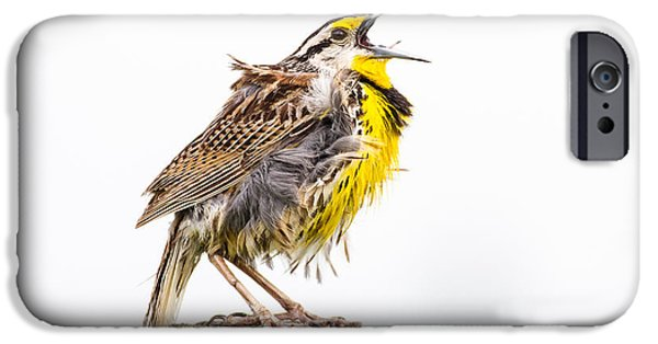 Singing Meadowlark 3rd Of 3 IPhone 6s Case by Bill Swindaman