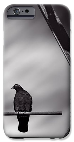 Pigeon iPhone 6s Case - Sitting On A Stick by Bob Orsillo