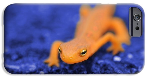 Newts iPhone 6s Case - Sly Salamander by Luke Moore