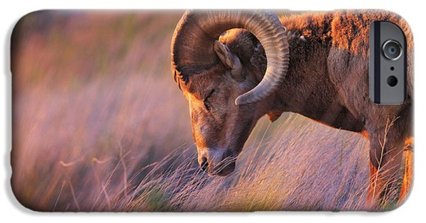 Rocky Mountain Bighorn Sheep iPhone 6s Case - Smell The Wind by Kadek Susanto