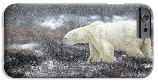 Polar Bear iPhone 6s Case - Snowing Time by Alessandro Catta