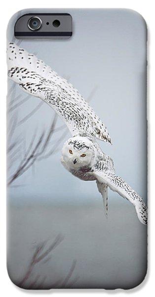Snowy Owl In Flight IPhone 6s Case