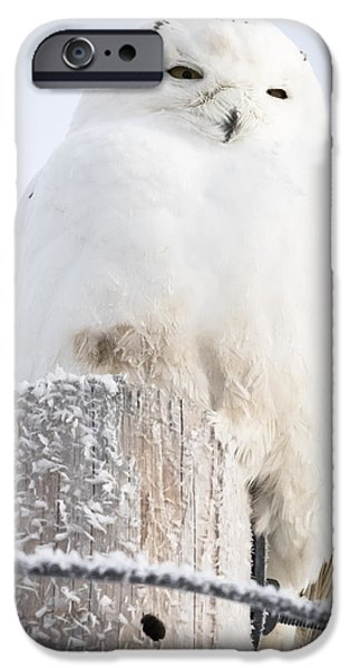 Snowy Owl IPhone 6s Case by Ricky L Jones