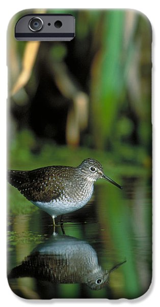 Solitary Sandpiper IPhone 6s Case by Paul J. Fusco