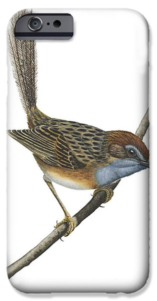 Southern Emu Wren IPhone 6s Case