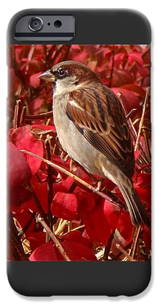 Sparrow IPhone 6s Case