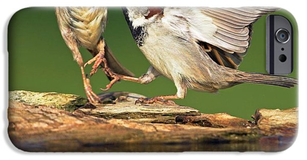 Sparrows Fighting IPhone 6s Case