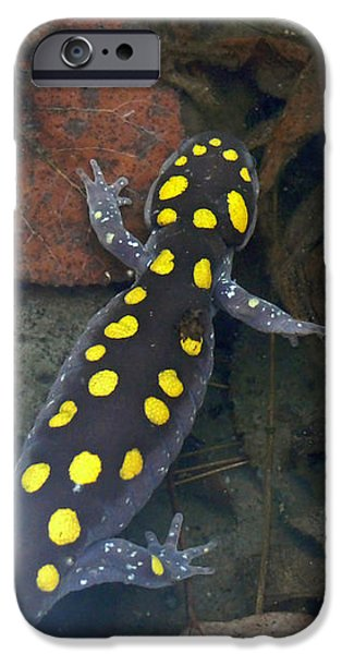Spotted Salamander IPhone 6s Case by Christina Rollo