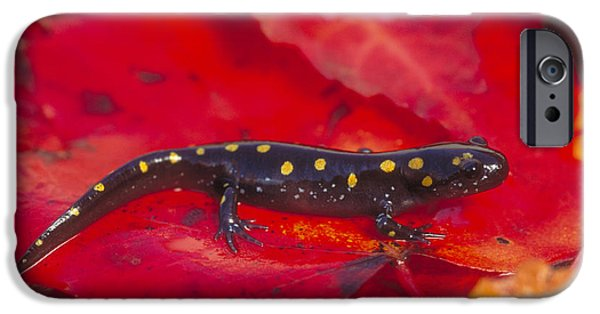 Spotted Salamander IPhone 6s Case