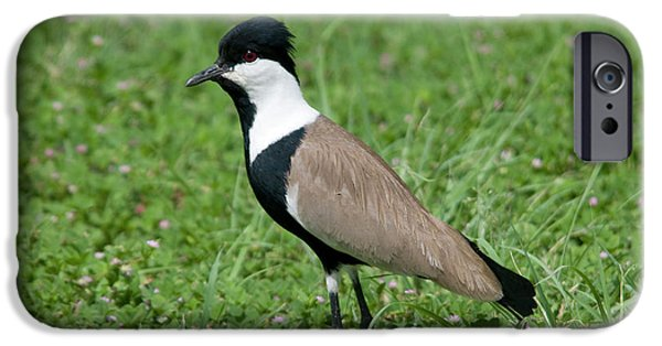 Lapwing iPhone 6s Case - Spur-winged Plover by Nigel Downer