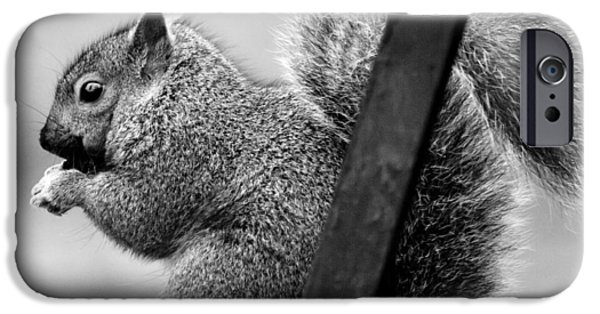 IPhone 6s Case featuring the photograph Squirrels by Ricky L Jones