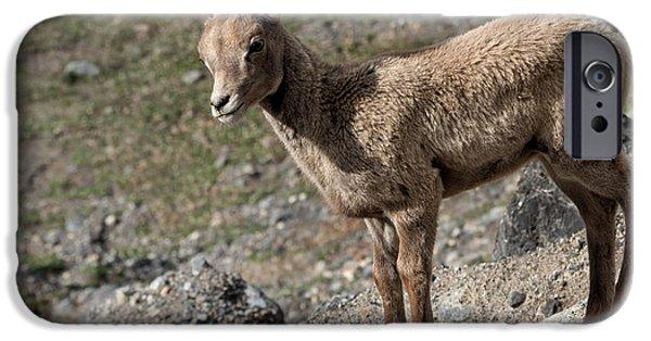 Rocky Mountain Bighorn Sheep iPhone 6s Case - Stone Lamb by Kathleen Bishop