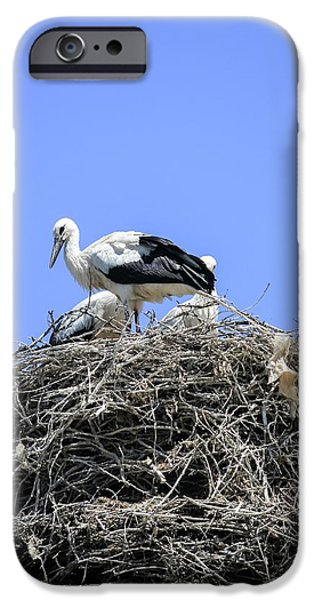 Storks Nesting IPhone 6s Case by Photostock-israel