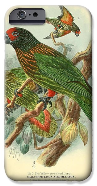 Streaked Lory IPhone 6s Case