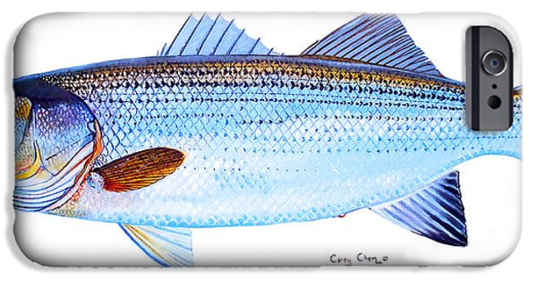 Striped Bass IPhone 6s Case by Carey Chen