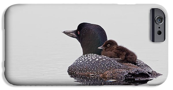 Loon iPhone 6s Case - Sunday Ride by Jeff Sinon
