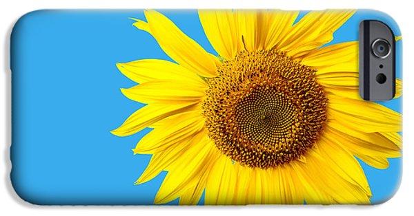 Sunflower iPhone 6s Case - Sunflower Blue Sky by Edward Fielding