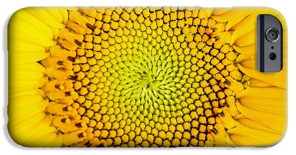 Sunflower  IPhone 6s Case by Edward Fielding