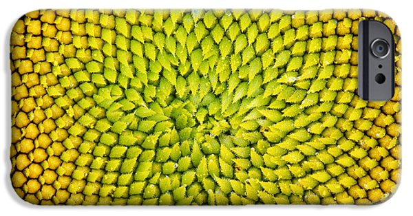 Sunflower iPhone 6s Case - Sunflower Middle  by Tim Gainey