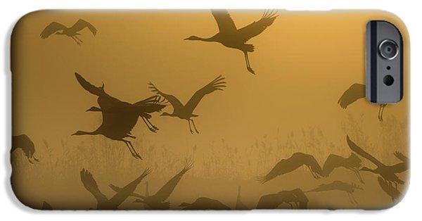 Crane iPhone 6s Case - Sunrise With Cranes by Ronen Rosenblatt