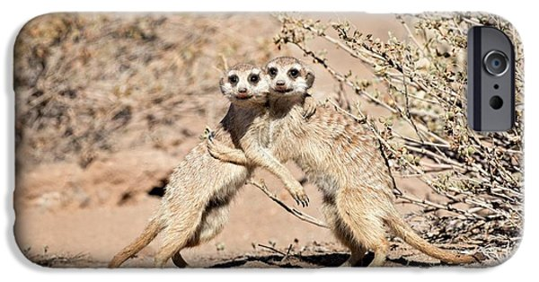 Suricates At Play IPhone 6s Case