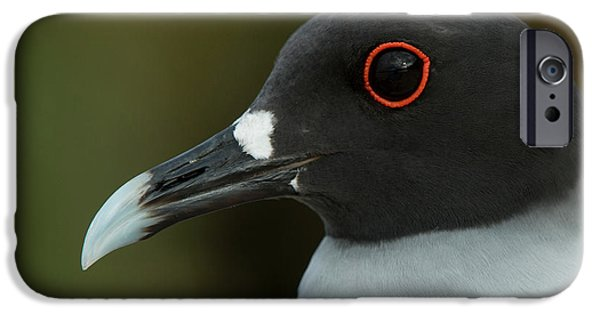 Swallow-tailed Gull (larus Furcatus IPhone 6s Case by Pete Oxford