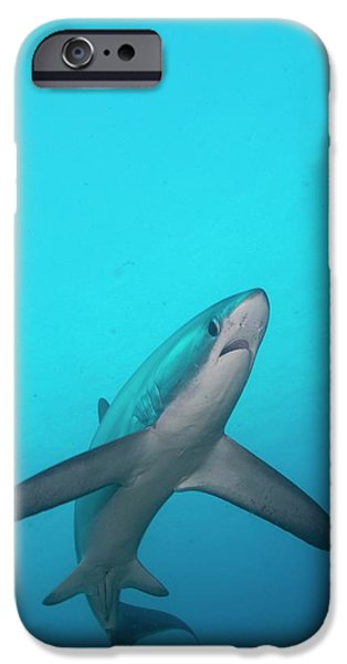 Swimming Thresher Shark IPhone 6s Case by Scubazoo