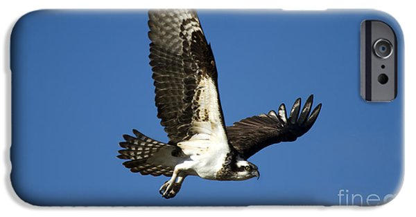 Take Flight IPhone 6s Case