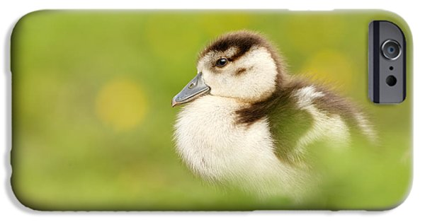 Gosling iPhone 6s Case - The Gosling In The Grass by Roeselien Raimond