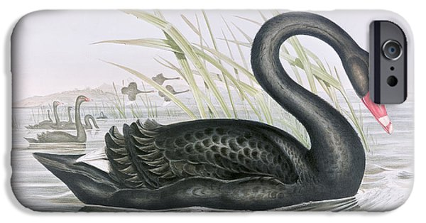 The Black Swan IPhone 6s Case by John Gould