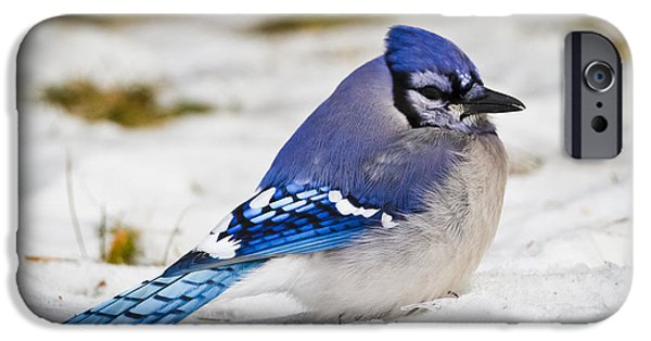 The Bluejay IPhone 6s Case by Ricky L Jones