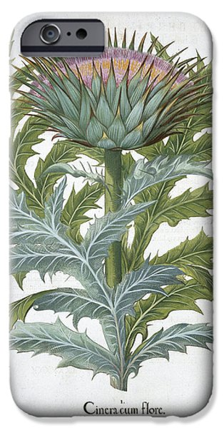The Cardoon, From The Hortus IPhone 6s Case