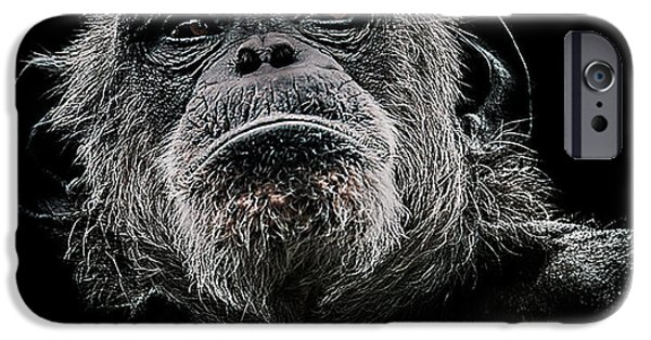 Chimpanzee iPhone 6s Case - The Dictator by Paul Neville