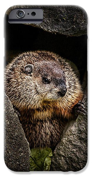 The Groundhog IPhone 6s Case
