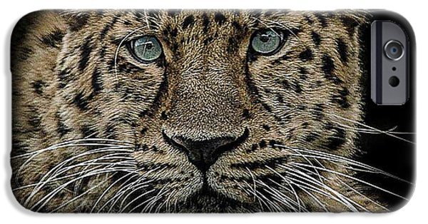 Leopard iPhone 6s Case - The Interrogator  by Paul Neville