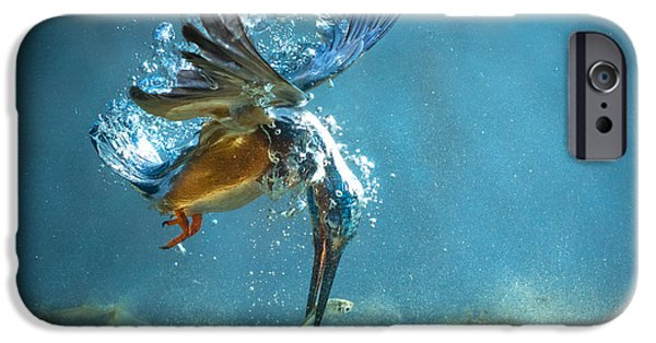 The Kingfisher IPhone 6s Case