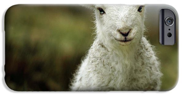 Rural Scenes iPhone 6s Case - The Lamb by Angel Ciesniarska