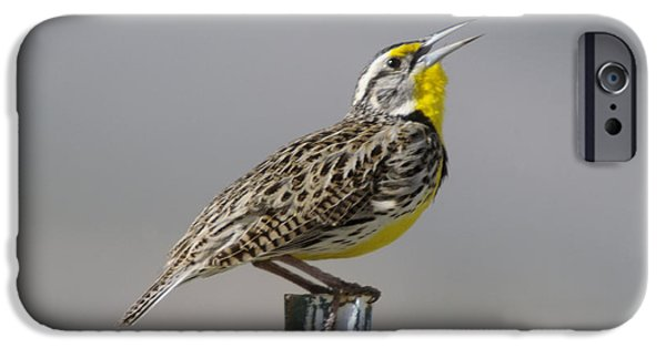 Meadowlark iPhone 6s Case - The Meadowlark Sings  by Jeff Swan