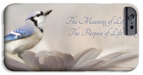 Bluejay iPhone 6s Case - The Meaning Of Life by Lori Deiter