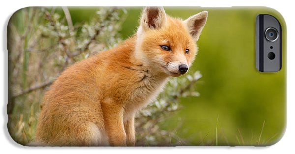 The New Kit ...curious Red Fox Cub IPhone 6s Case