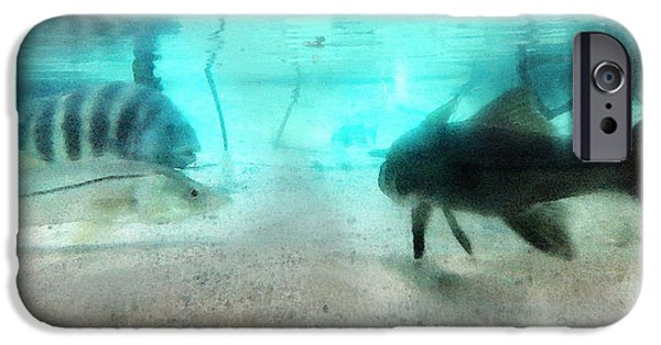 Scuba Diving iPhone 6s Case - The Storyteller - A Fish Tale By Sharon Cummings by Sharon Cummings