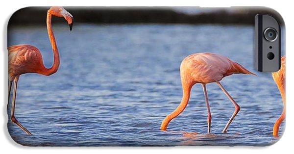 Flamingo iPhone 6s Case - The Three Flamingos by Adam Romanowicz