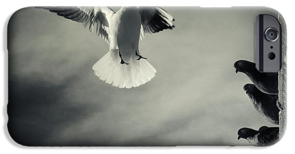Pigeon iPhone 6s Case - The White And The Blacks by Marco Bianchetti