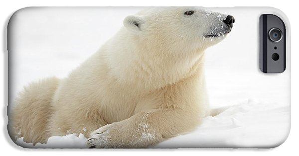 Polar Bear iPhone 6s Case - There's Something In The Air by Marco Pozzi