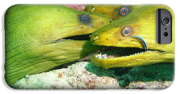 Scuba Diving iPhone 6s Case - Three Eels by Carey Chen