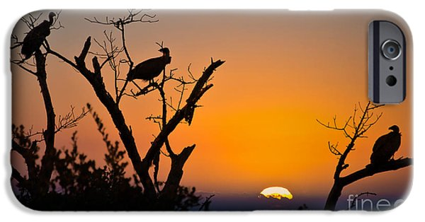 Vulture iPhone 6s Case - Three Vultures Waiting by Delphimages Photo Creations